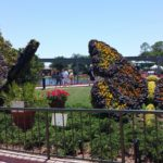 Butterfly topiaries!