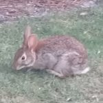 I may have gotten carried away taking pictures of bunnies.